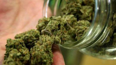 Cannabis light Consiglio Superiore di Sanità dice no