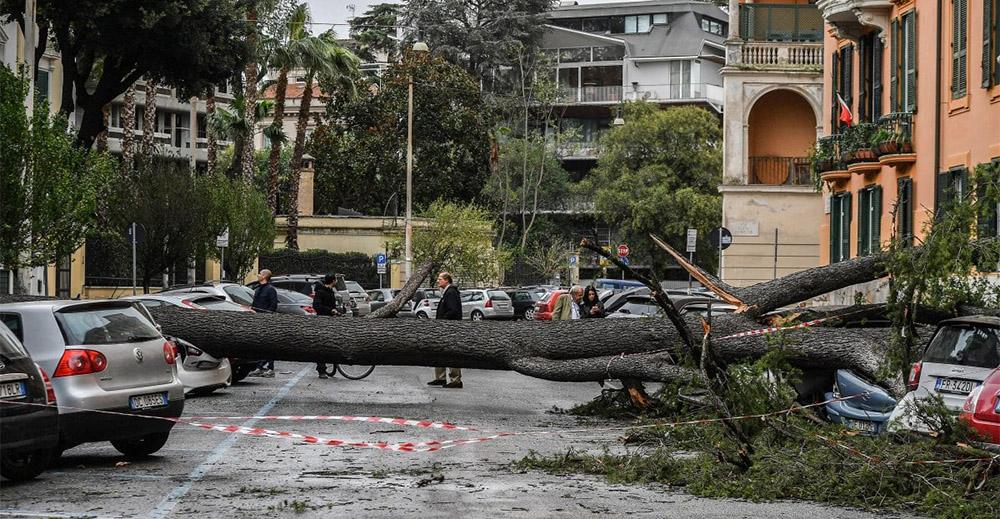 Roma albero sradicato dal maltempo