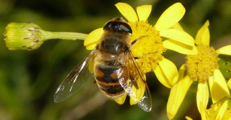 Photo of Le api sono in via d'estinzione ed è una cosa che ci riguarda tutti
