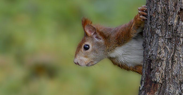 Photo of L'allarme dell'Onu: «Una specie vivente su otto a rischio estinzione»
