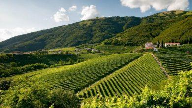 Photo of Le colline del Prosecco e i nuovi siti protetti dall'Unesco