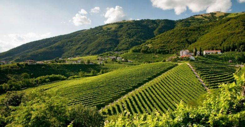 Le colline del Prosecco e i nuovi siti protetti dall'Unesco