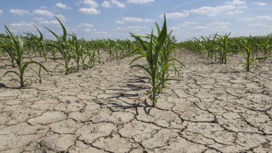 Photo of Allarme clima, mangiare meno carne può aiutare a salvare il pianeta