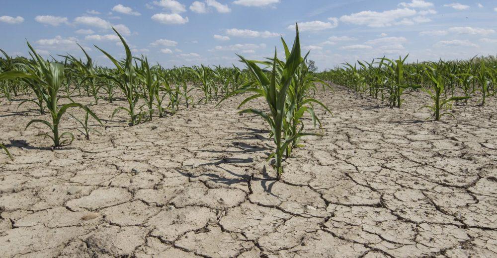 Allarme clima, mangiare meno carne può aiutare a salvare il pianeta