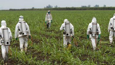 Photo of L'Ue assolve il glifosato: «Non è cancerogeno»