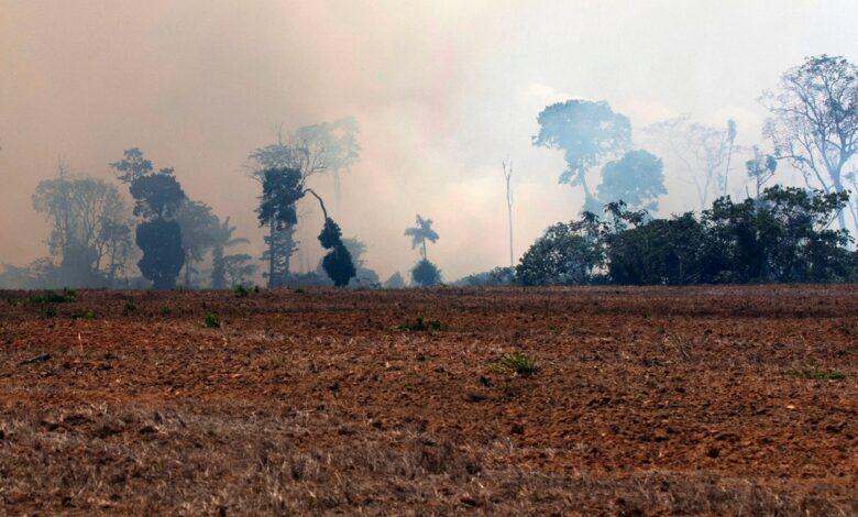 Photo of Il 2020 sarà l'anno nero per gli incendi in Amazzonia
