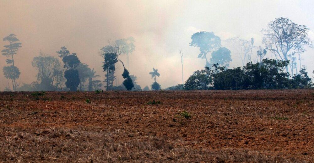 Il 2020 sarà l'anno nero per la foresta amazzonica