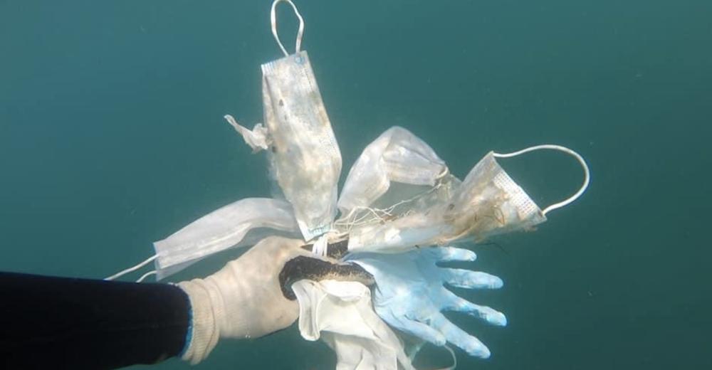 Coronavirus, allarme inquinamento: «In mare più mascherine che meduse»