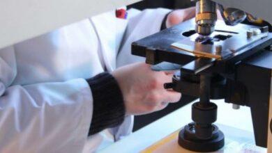 Photo of Quercetina, dove si trova la molecola che potrebbe inibire il coronavirus